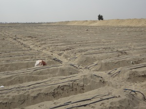 Here's a great example of the innovative spirit of so many of our partners.  This is a sand field that can produce high-quality organic agriculture by the above-ground irrigation and nutrient distribution system.  This type of production agriculture is critical for food insecure places like the barren lands in remote Peru or Egypt.